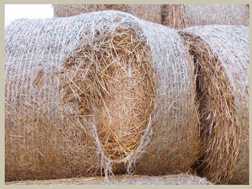 Bale Doctor Netwrap Understanding simple problems 2-sca